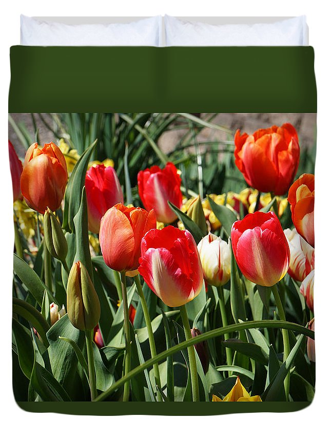Red Duvet Cover featuring the photograph Red Orange Tulip Flowers Art Prints by Baslee Troutman