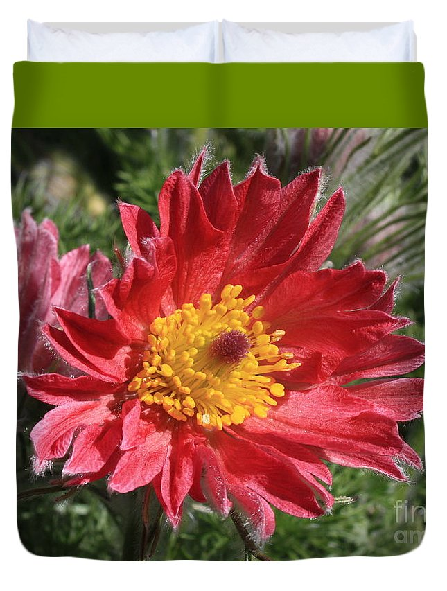 Red Pasque Flower Duvet Cover featuring the photograph Red Pasque Flower by Carol Groenen