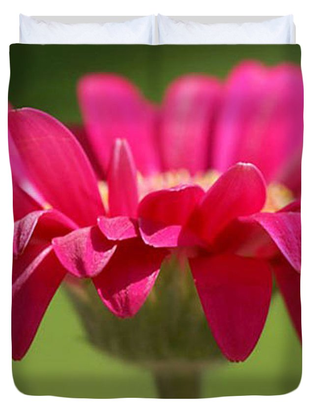 Pink Duvet Cover featuring the photograph Red Pink Daisy by Carol Lynch