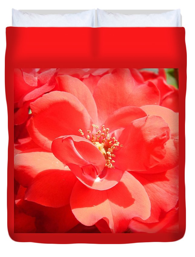 Red Duvet Cover featuring the photograph Red Rose In Full Bloom by Nicki Bennett