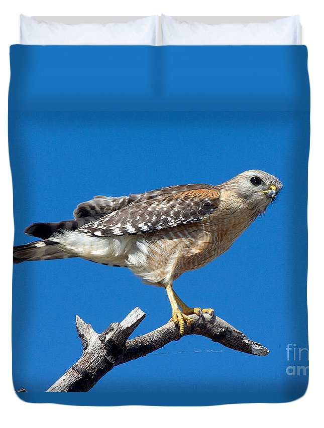 Animal Duvet Cover featuring the photograph Red-shoulder Hawk by Anthony Mercieca