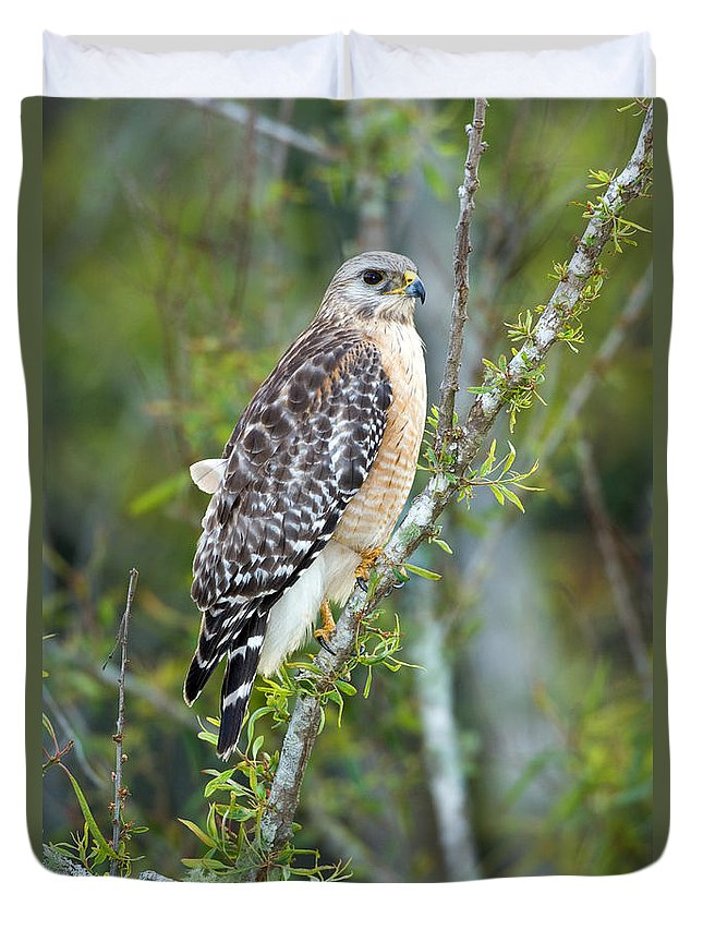 Animal Duvet Cover featuring the photograph Red-shouldered Hawk by Anthony Mercieca