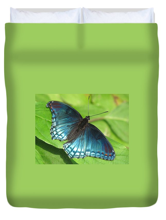 Red-spotted Purple(limemtis Astyanax) Duvet Cover featuring the photograph Red-spotted Purple by Eric Noa