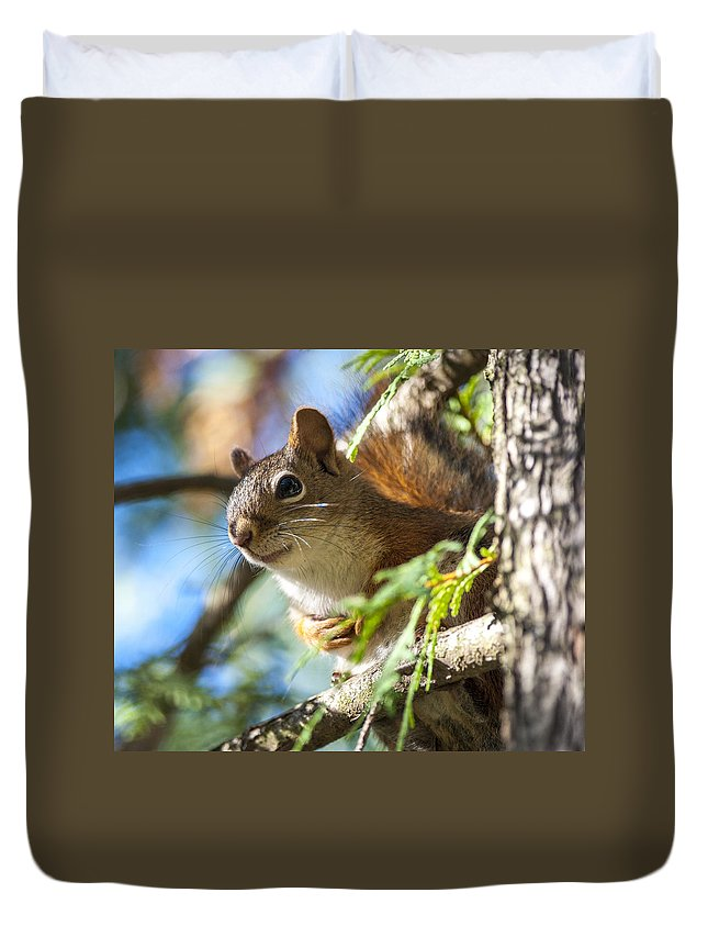 Red Squirrel Duvet Cover featuring the photograph Red Squirrel In The Sun by Richard Kitchen