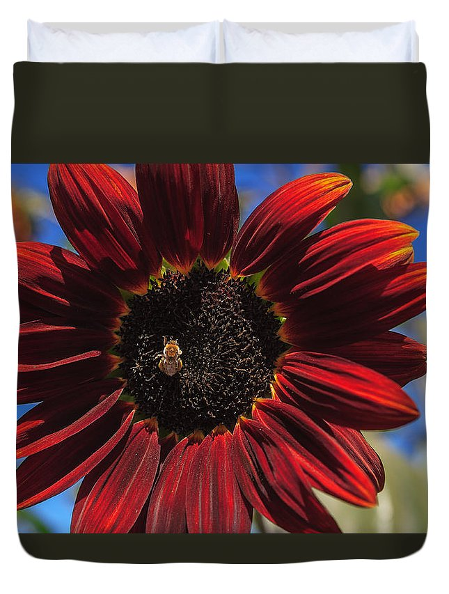 Sunflower Duvet Cover featuring the photograph Red Sun Honey by Scott Campbell