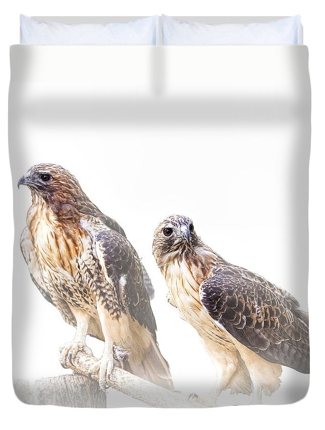 Art Duvet Cover featuring the photograph Red Tail Hawk Pair On White Background by Randall Nyhof