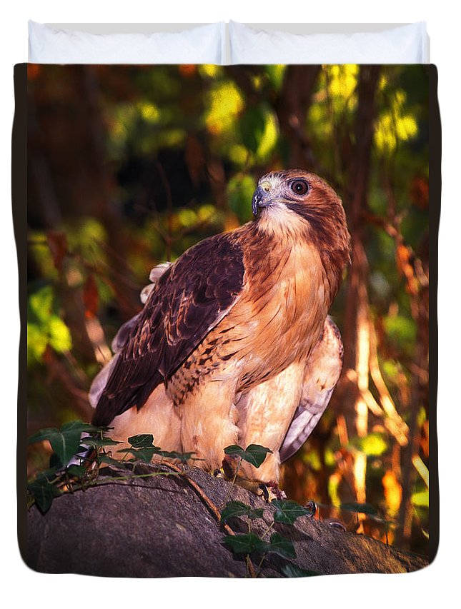 Hawk Duvet Cover featuring the photograph Red Tailed Hawk - 53 by Paul W Faust - Impressions of Light