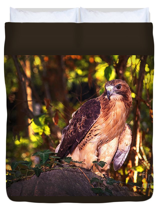 Hawk Duvet Cover featuring the photograph Red Tailed Hawk - 54 by Paul W Faust - Impressions of Light
