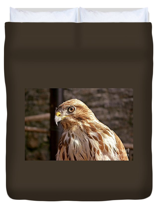 Red-tailed Hawk Duvet Cover featuring the photograph Red-tailed Hawk by Bosko Martinovic