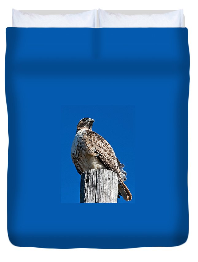 Hawk Duvet Cover featuring the photograph Red Tailed Hawk by Ronnie Prcin
