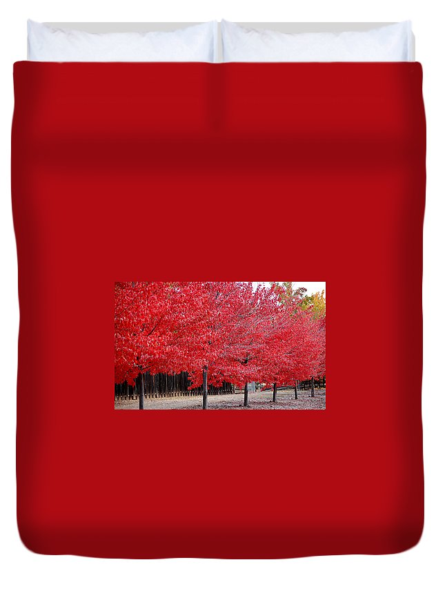 Red Leaves Leaf Tree Fall Colors Row Line Chico Ca Duvet Cover featuring the photograph Red Tree Line by Holly Blunkall