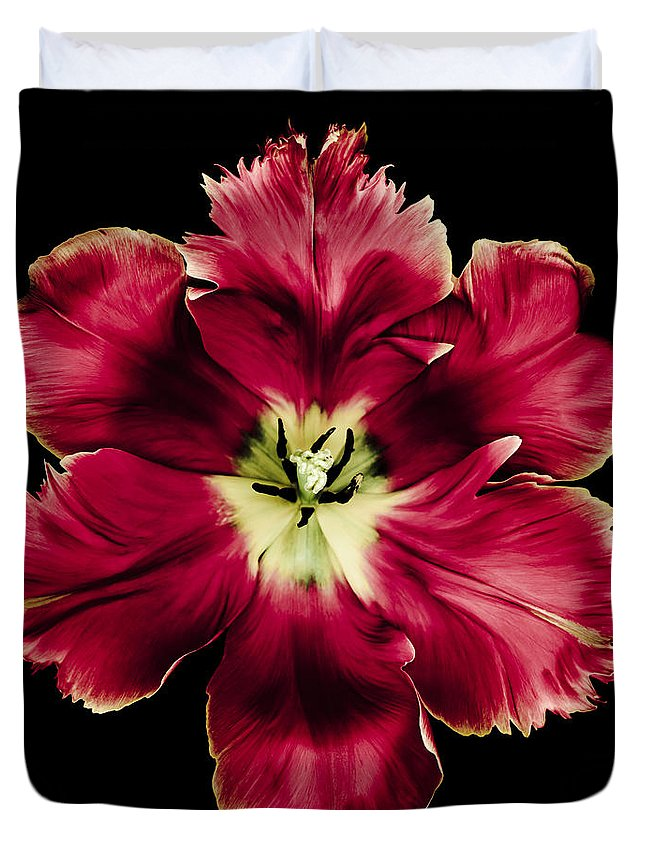 Parrot Tulip Duvet Cover featuring the photograph Red Tulip by Oscar Gutierrez