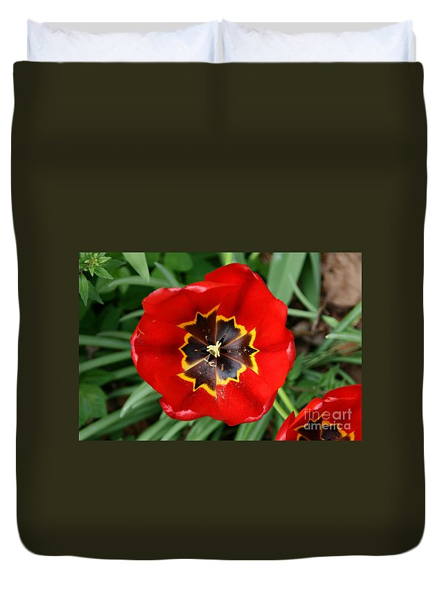 Agriculture Duvet Cover featuring the photograph Red Tulip by Paul Koomen