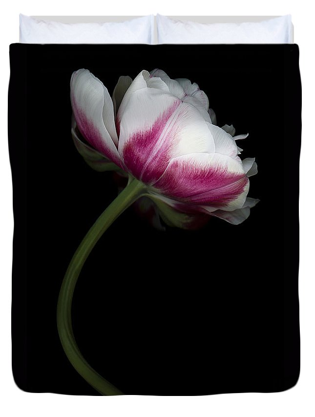 Double Tulip Duvet Cover featuring the photograph Red White Double Tulip by Oscar Gutierrez