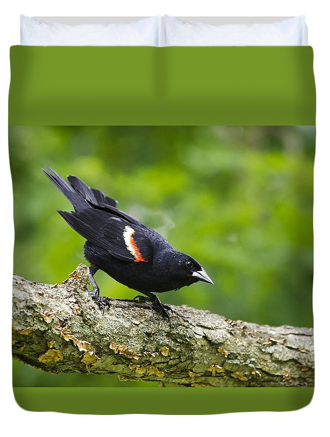 Bird Duvet Cover featuring the photograph Red Winged Blackbird by Christina Rollo