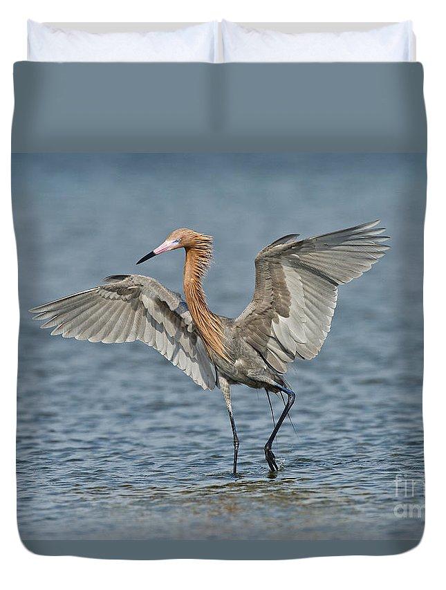 Reddish Egret Duvet Cover featuring the photograph Reddish Egret Fishing by Anthony Mercieca