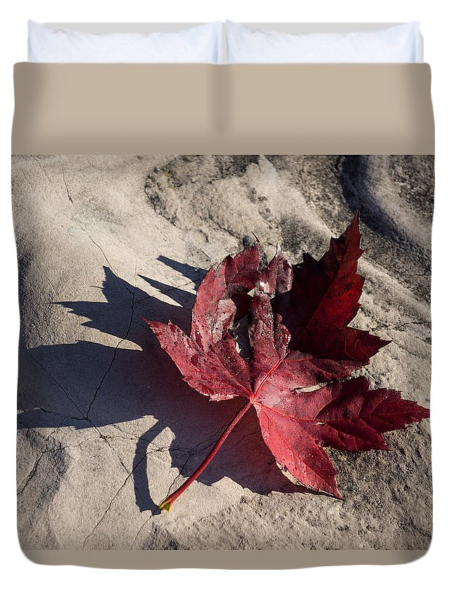 Maple Leaf Duvet Cover featuring the photograph Reds And Purples - Deep Red Maple Leaf And Its Shadow by Georgia Mizuleva