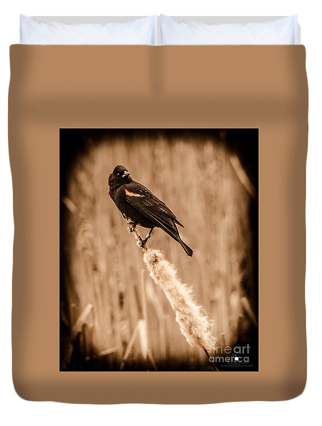 Red Wing Blackbird Duvet Cover featuring the photograph Redwing Blackbird On Cattail by Grace Grogan