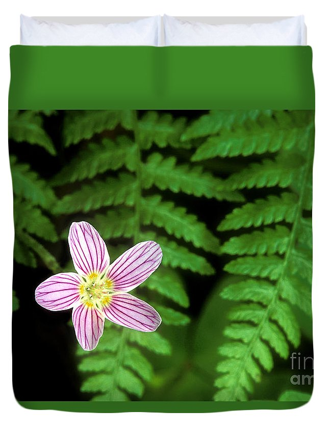 Redwood Sorrel Duvet Cover featuring the photograph Redwood Sorrel Wildflower Nestled In Ferns by Dave Welling