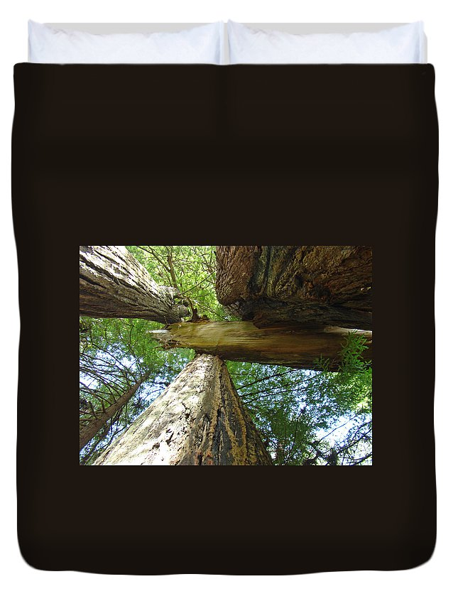 Redwood Duvet Cover featuring the photograph Redwoods Forest Art Prints Canvas Framed Redwood Trees by Baslee Troutman