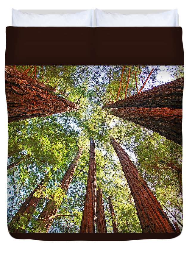 Redwoods Duvet Cover featuring the photograph Redwoods by Jack Schultz