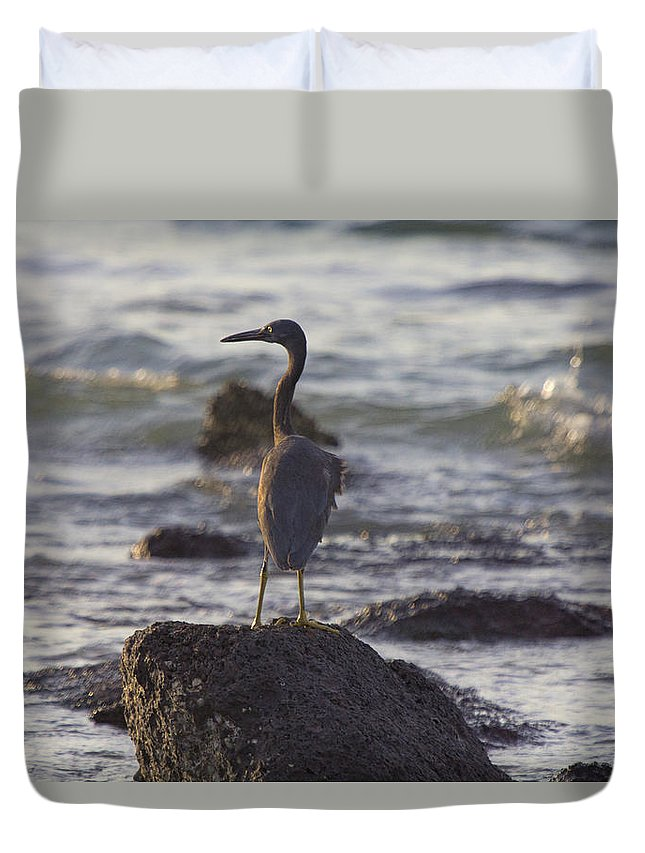 Reef Egret Duvet Cover featuring the photograph Reef Egret by Douglas Barnard
