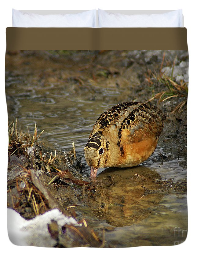 Woodcock Duvet Cover featuring the photograph Reflected Eye Woodcock by Timothy Flanigan