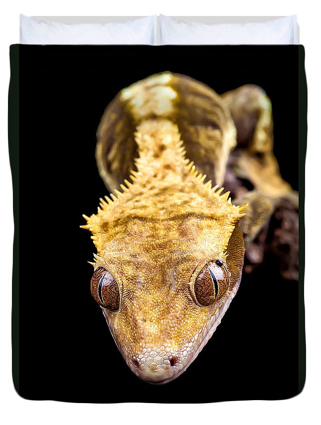 Abstract Duvet Cover featuring the photograph Reptile Close Up On Black by Simon Bratt Photography LRPS