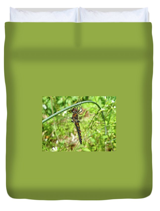 Dragonfly Duvet Cover featuring the photograph Resting Brown Dragonfly by Mother Nature