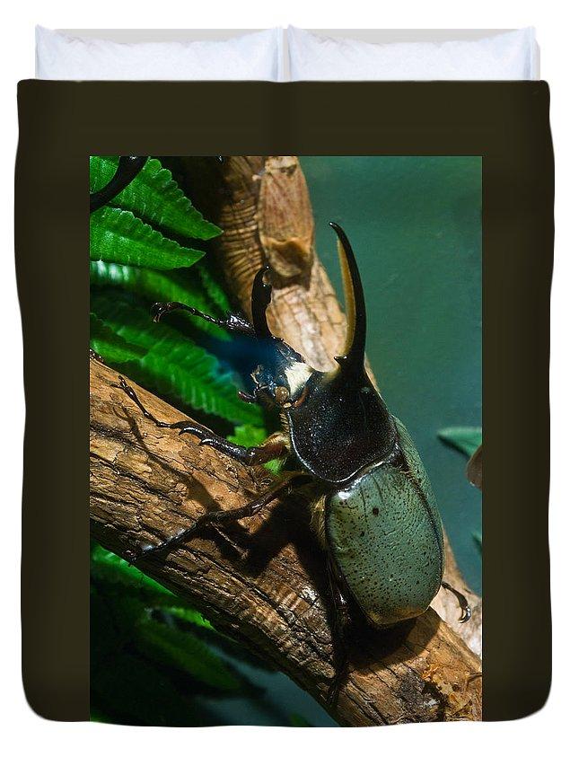 Rhinoceros Duvet Cover featuring the photograph Rhinoceros Beetle by Douglas Barnett
