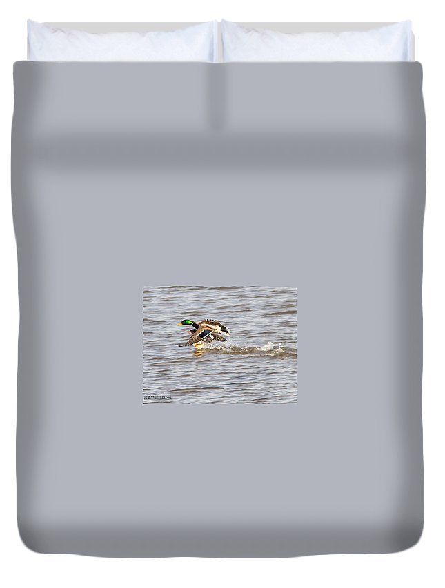 Ducks Duvet Cover featuring the photograph Riding Piggy Back by Brian Williamson