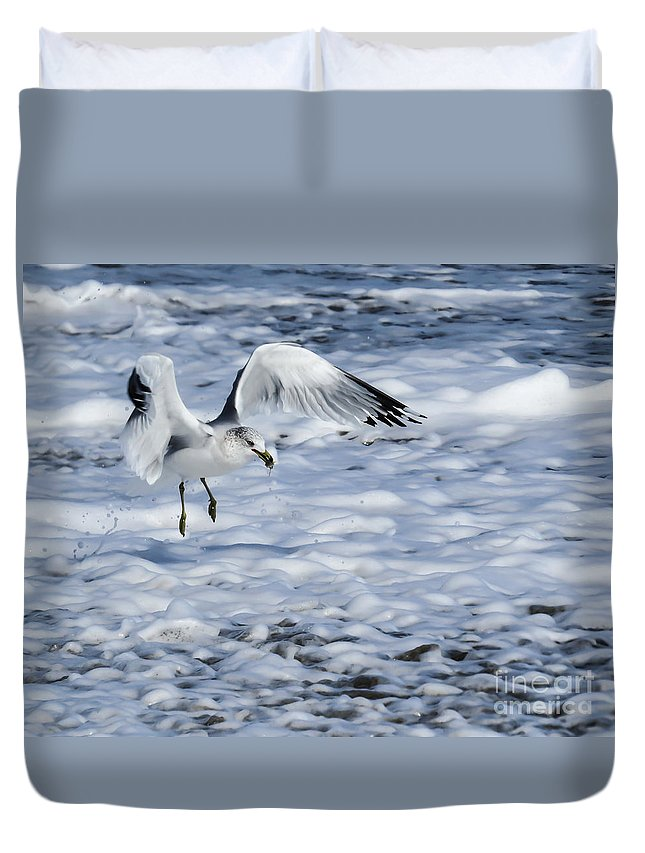 Gull Duvet Cover featuring the photograph Ring-billed Gull by Zina Stromberg