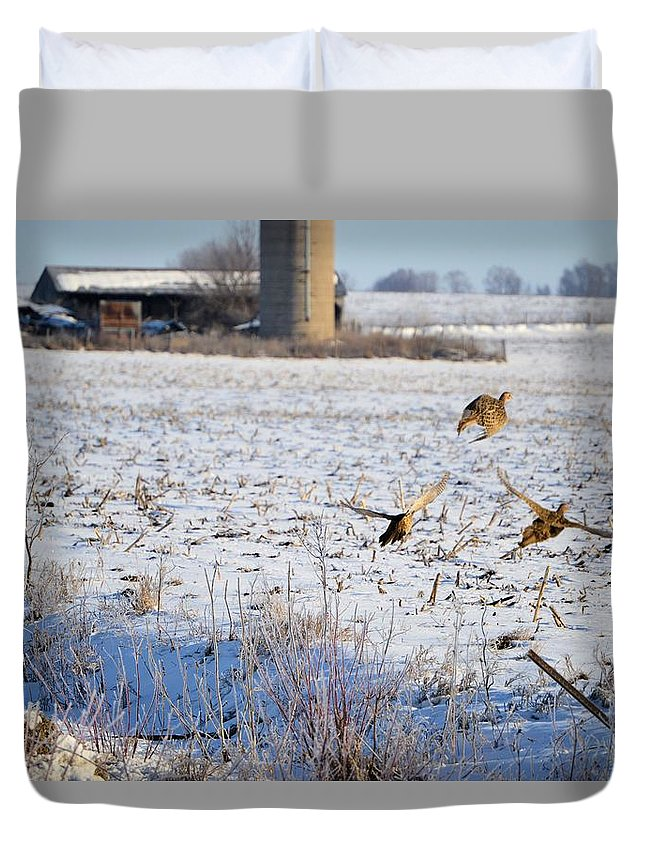 Pheasants Duvet Cover featuring the photograph Ring Neck Hens Escape by Bonfire Photography