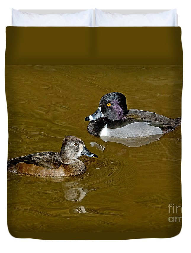 Nature Duvet Cover featuring the photograph Ring-necked Duck Pair by Anthony Mercieca