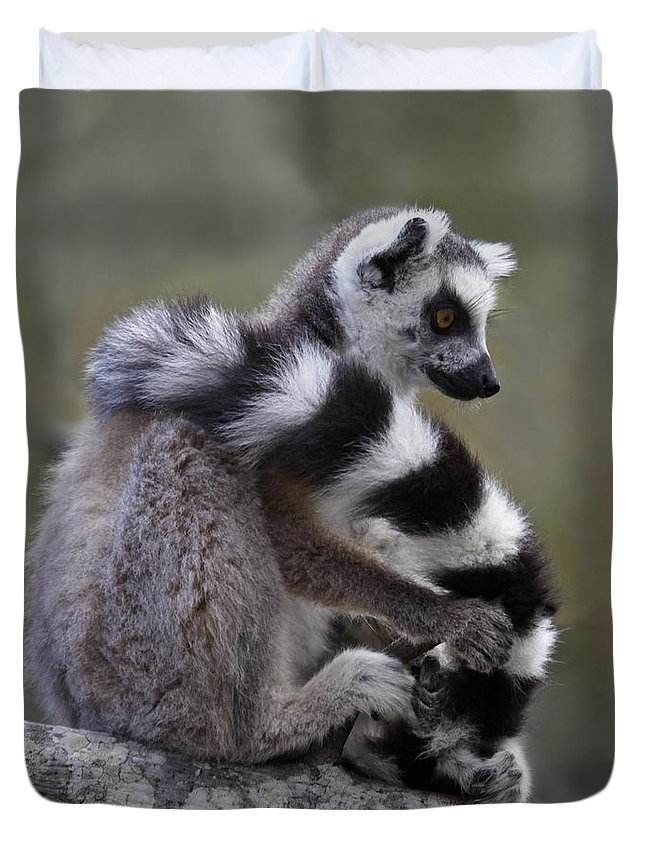 Ring-tailed Lemur Duvet Cover featuring the photograph Ring-tailed Lemur Lemur Catta by Liz Leyden