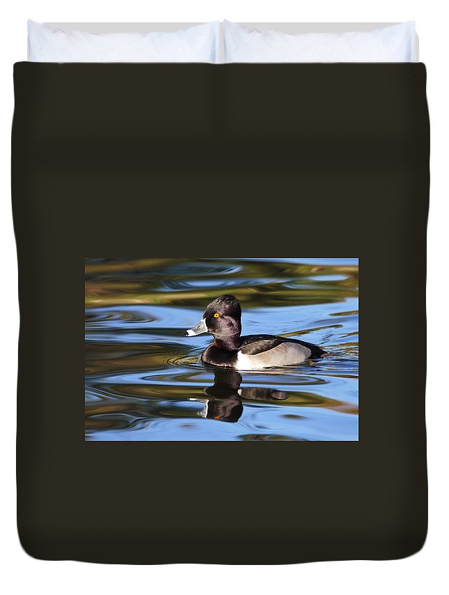 Ring-necked Duck Duvet Cover featuring the photograph Rings around Ring-necked Duck by Andrew McInnes