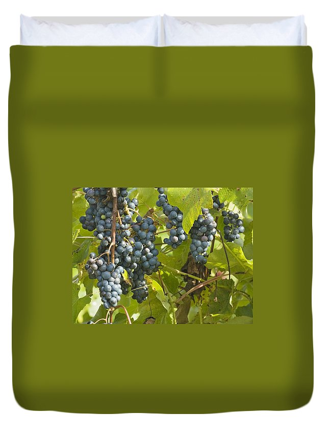 Vineyard Duvet Cover featuring the photograph Ripe Purple Grapes On Vine by Keith Webber Jr