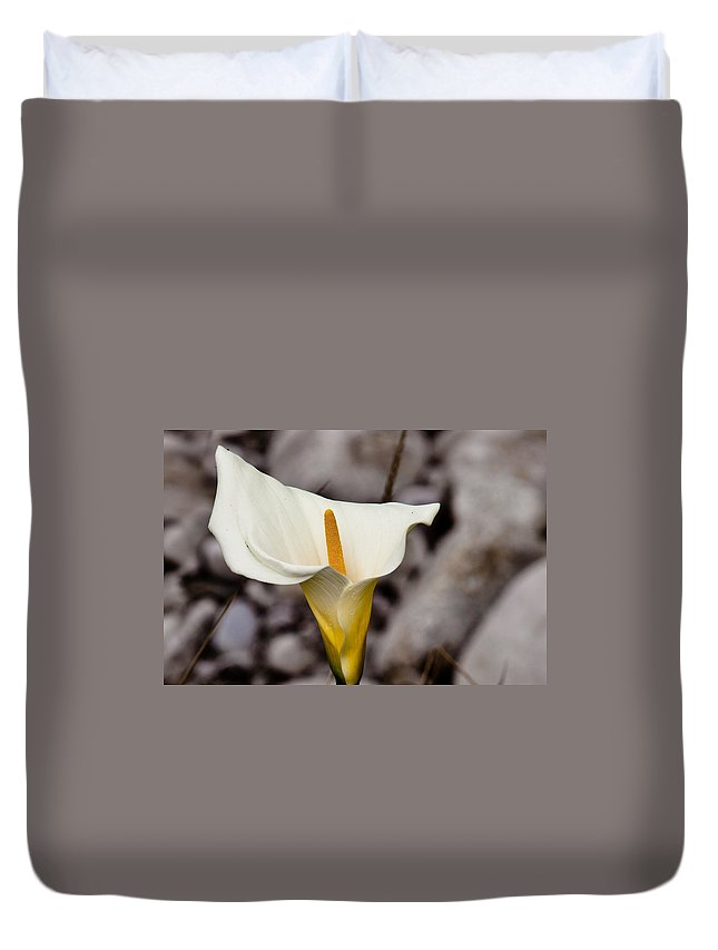 White Flower Duvet Cover featuring the photograph Rock Calla Lily by Melinda Ledsome