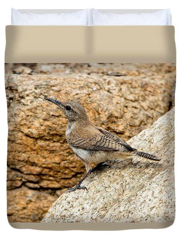 Rock Wren Duvet Cover featuring the photograph Rock Wren Juvinile by Anthony Mercieca