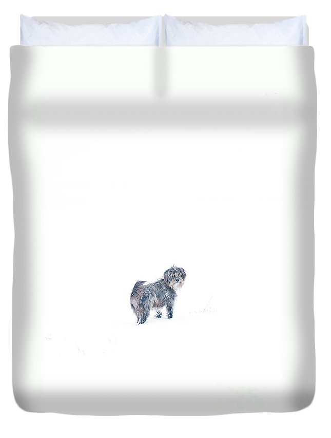 Four Legged Animal Duvet Cover featuring the photograph Rocky by Cheryl Baxter