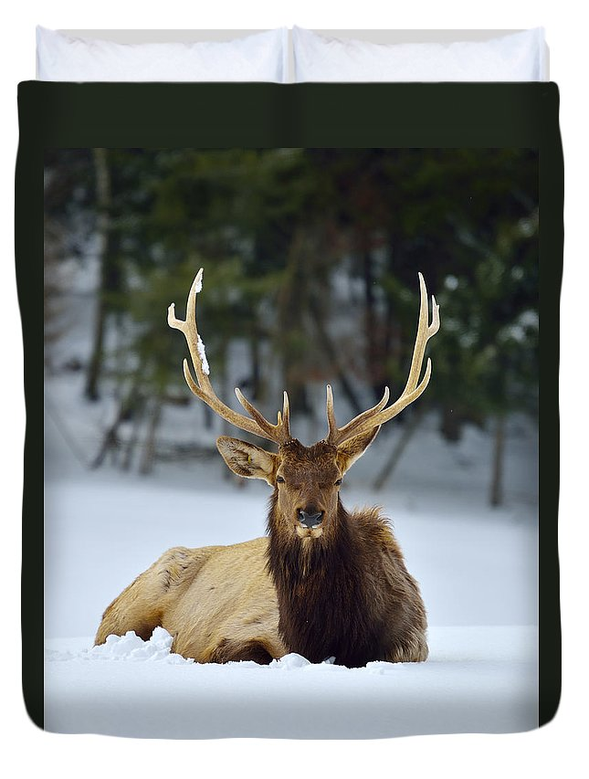 Elk Duvet Cover featuring the photograph Rocky Mountain Elk by Joshua McCullough