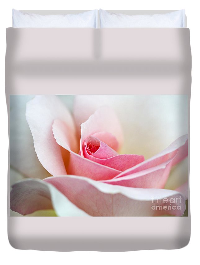Rosa A Whiter Shade Of Pale Peafanfare Duvet Cover featuring the photograph Rosa A Whiter Shade Of Pale by Lana Enderle
