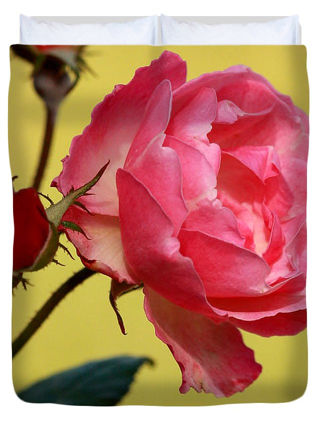 Macro Duvet Cover featuring the photograph Rose And Rose Buds by Sabrina L Ryan