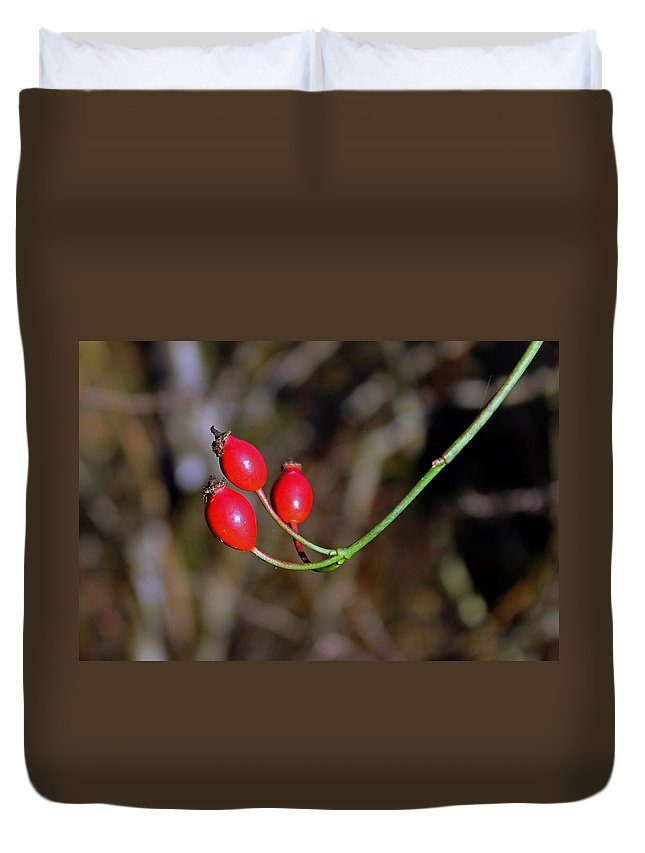 Rose Hips Duvet Cover featuring the photograph Rose Hips by Tony Murtagh
