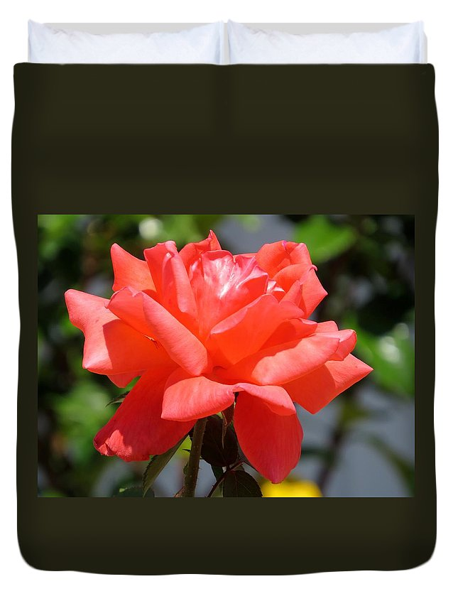 Pink Rose Duvet Cover featuring the photograph Rose II by Zina Stromberg