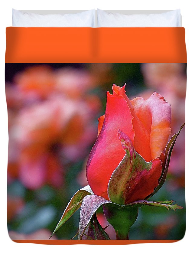 Red Rose Duvet Cover featuring the photograph Rose On Rose by Rona Black