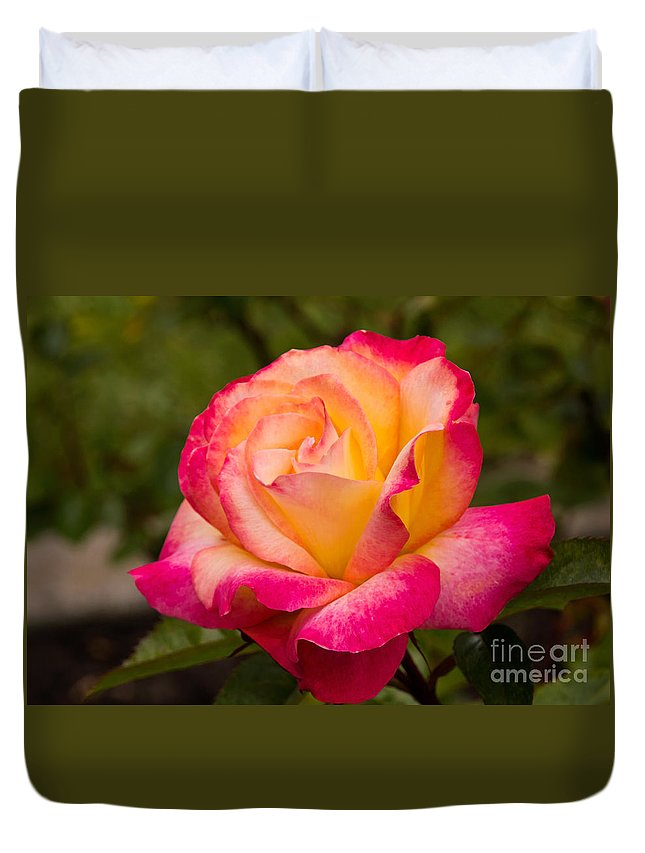 Flower Duvet Cover featuring the photograph Rose Rainbow Sorbet by Kate Brown