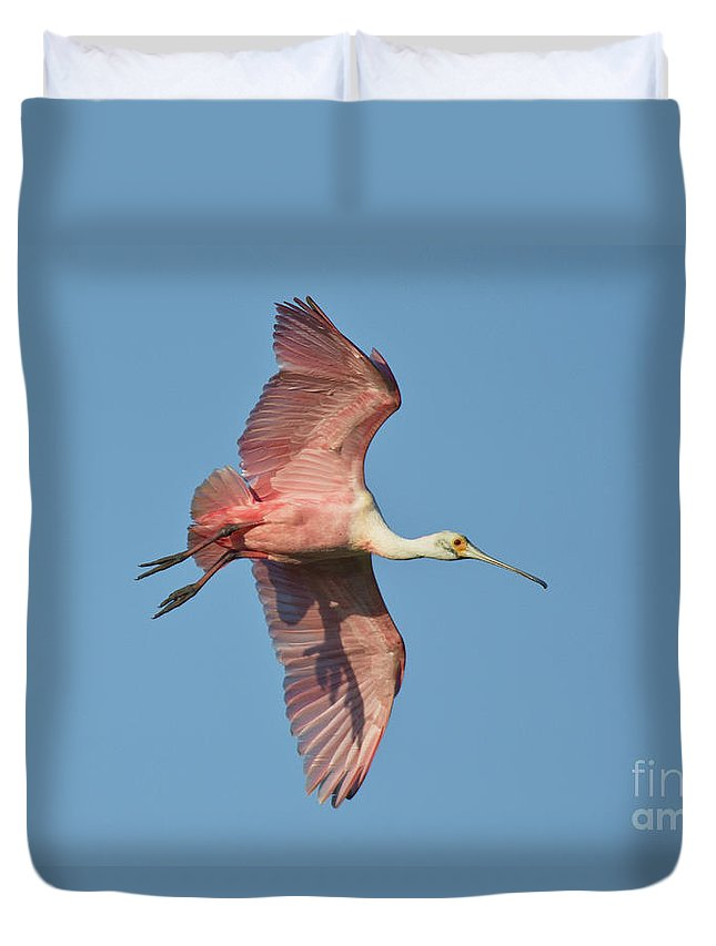 Roseate Spoonbill Duvet Cover featuring the photograph Roseate Spoonbill by Anthony Mercieca