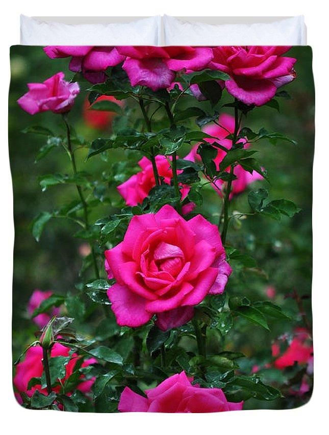 Rosebush Photographs Duvet Covers