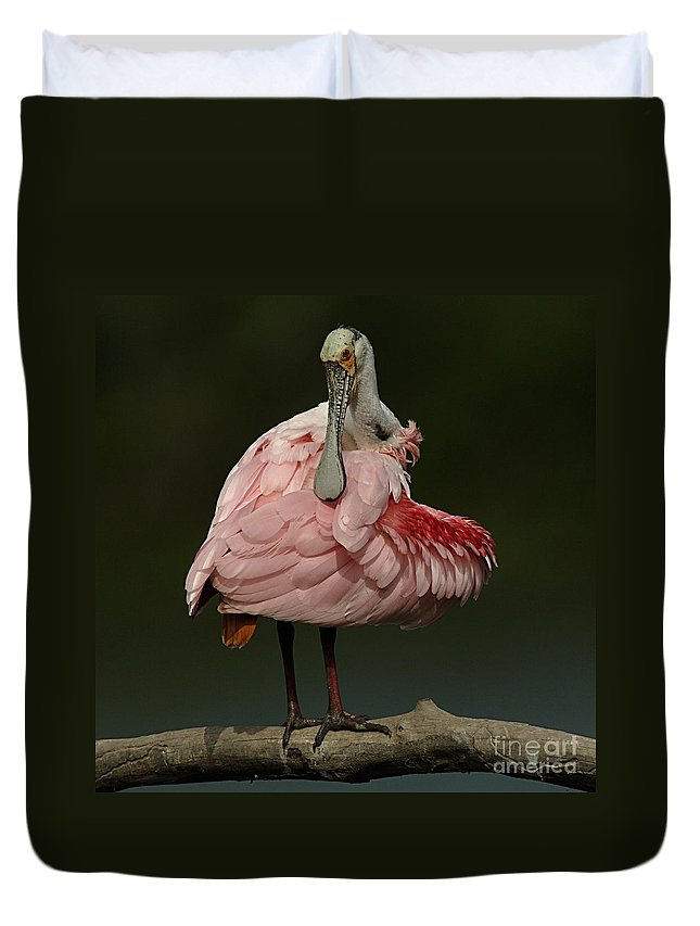 Bird Duvet Cover featuring the photograph Rosiette Spoonbill by Bob Christopher
